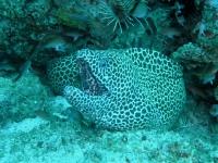 Dive_3